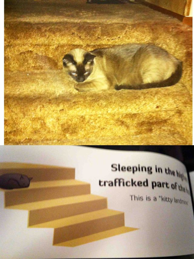 """Sleeping in the highest trafficked part of the stairs. This is a """"kitty landmine"""""""