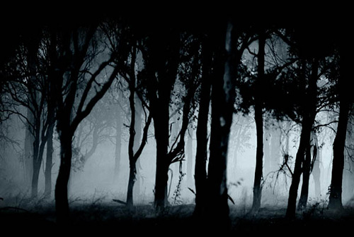 5_woods1