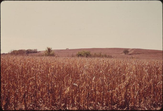 800px-CORNFIELD_THAT_FORMERLY_WAS_OPEN_TALLGRASS_PRAIRIE_NEAR_WHITE_CLOUD,_KANSAS,_AND_TROY_IN_DONIPHAN_COUNTY_IN_THE..._-_NARA_-_557160