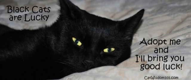 Black-cat-luck