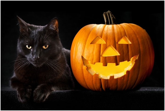 black-cats-7da86e92