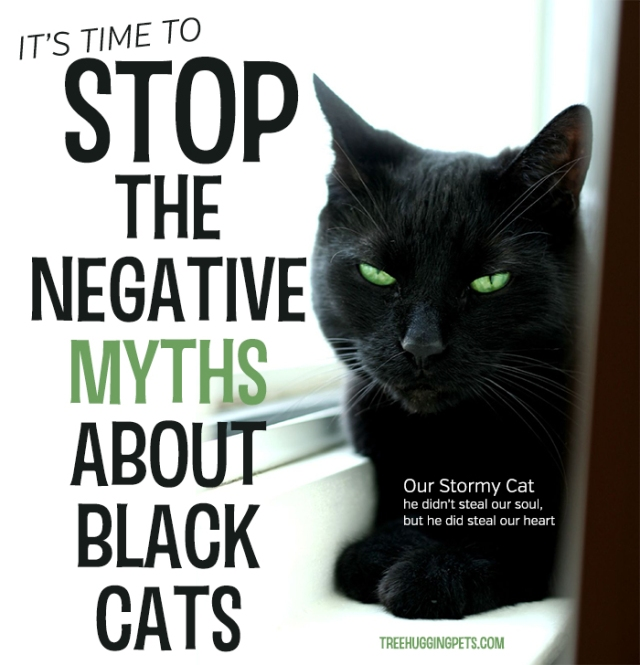 stop-the-negative-myths-about-black-cats