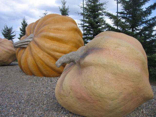 Largest Pumpkins